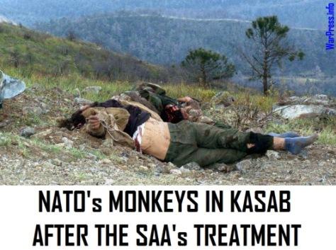 NATOs MONKEYS AFTER THE SAAs TREATMENT